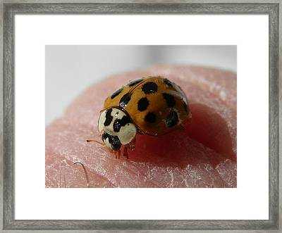 Framed Print featuring the photograph Ladybug On Finger by Chad and Stacey Hall