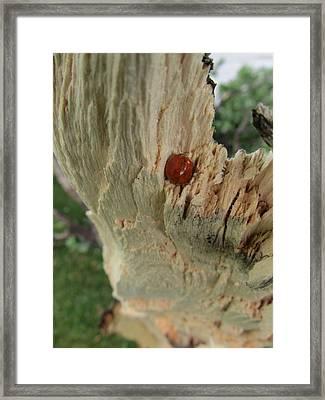 Ladybug Framed Print by Todd Sherlock