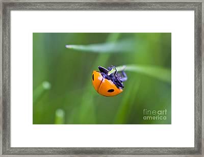 Ladybug Topsy Turvy Framed Print by Donna Munro
