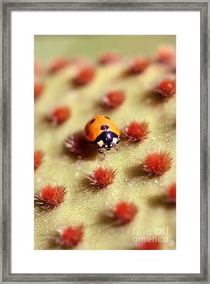 Ladybug2 Framed Print