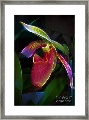Lady's Slipper Framed Print by Judi Bagwell