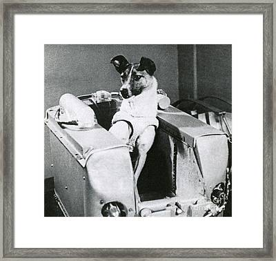 Laika Framed Print by Science Source