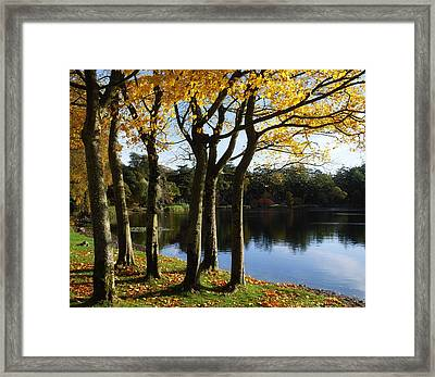 Lake And Trees, Mount Stewart, Co Down Framed Print by The Irish Image Collection