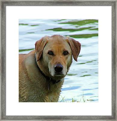Lake Dog Framed Print