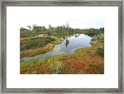 Lake In The Swamp Framed Print