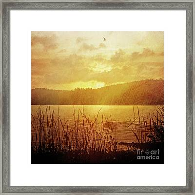 Lake Light Vintage Framed Print