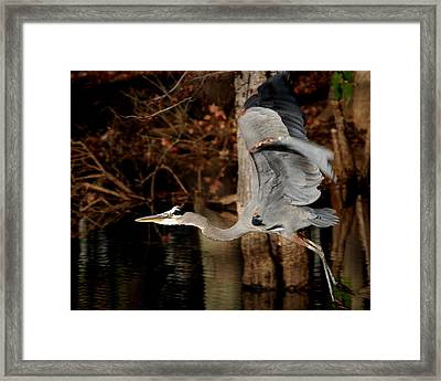 Lake Murray Heron Framed Print