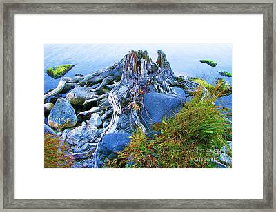 Framed Print featuring the photograph Lake Shore Weathered Stump by Michele Penner