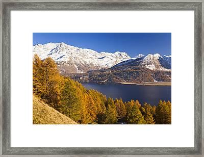 Lake Sils In Autumn Framed Print