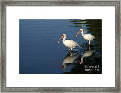 Lake Strolling Framed Print by Jack Norton