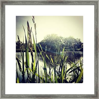 #lake #water #pond #skyline #sky #grass Framed Print