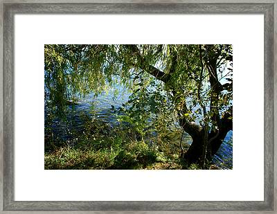 Lakeside Tree Framed Print