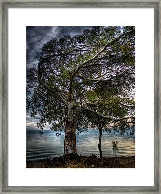 Lakeside Tree Framed Print by Tommy Farnsworth