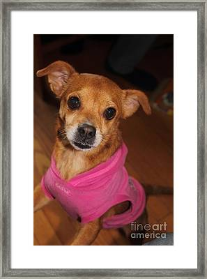 Lala Framed Print by Jesse Ciazza