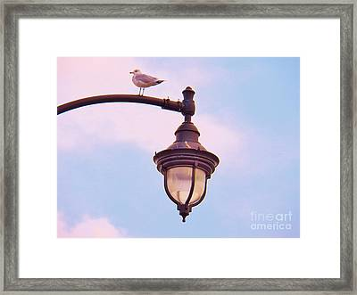 Lampost Gull   Two Framed Print by Judy Via-Wolff