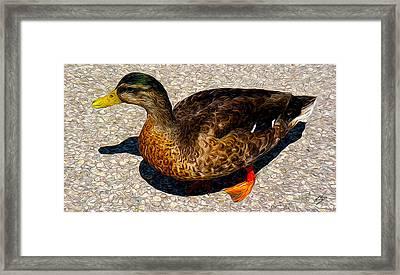 Land Duck Framed Print