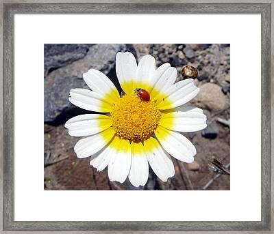 Landed On The Sun Framed Print by E White