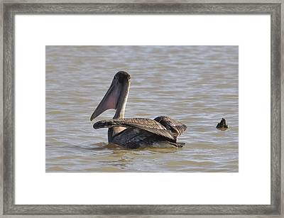 Framed Print featuring the photograph Landing by Helen Haw