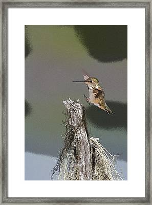 Landing Hummer- Abstract Framed Print by Tim Grams