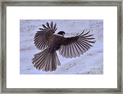 Framed Print featuring the photograph Landing by Jack Moskovita