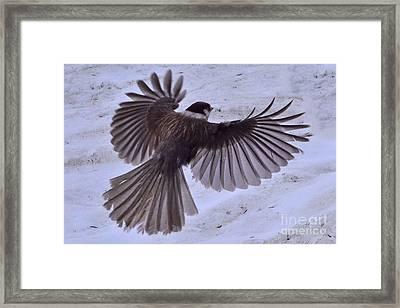 Landing Framed Print by Jack Moskovita