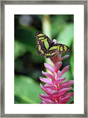 Landing On Top Framed Print