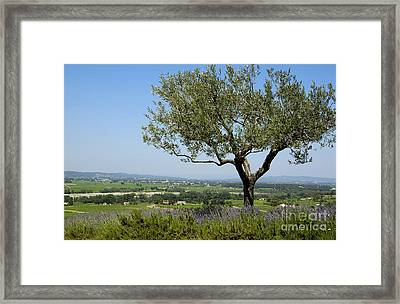 Landscape Of Provence. France Framed Print by Bernard Jaubert