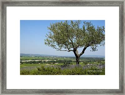 Landscape Of Provence. France Framed Print