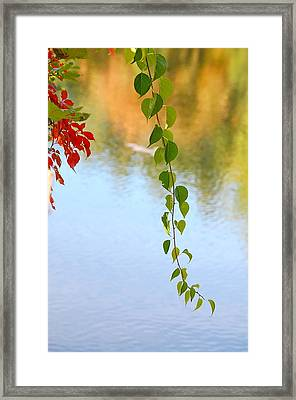 Languid Framed Print