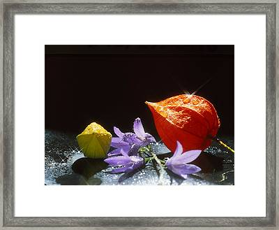 Lanterns Framed Print by Alfred Dominic Ligammari II