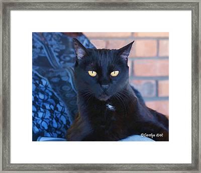 Lap Cat Framed Print