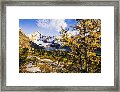 Larch Trees, Lake Mcarthur And Mount Framed Print