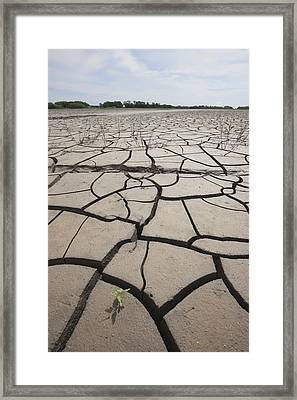 Large Cracks In The Earth From Dry Framed Print