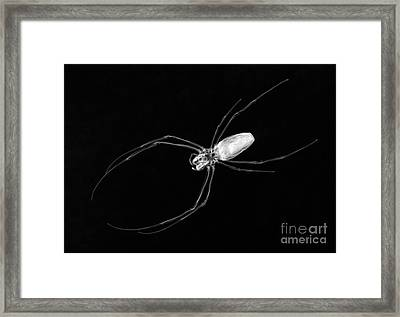 Large Spider X-ray Framed Print by Ted Kinsman