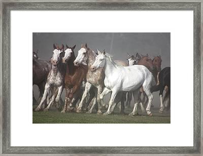 Las Tropillas Framed Print by by Felicitas Molina