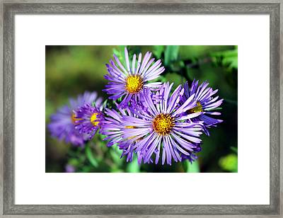 Last Bloom Framed Print