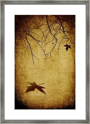 Last Breath Of Autumn Framed Print by Svetlana Sewell