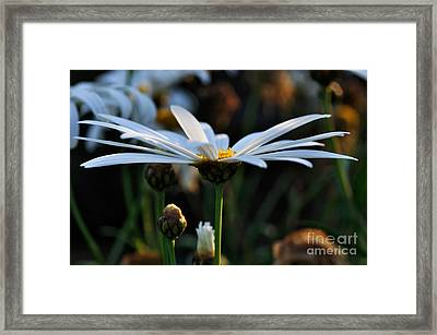 Last Glimpse Of Sunshine Framed Print