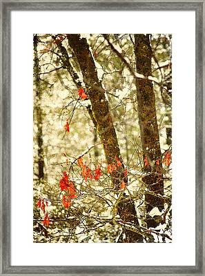 Last Leaves Clinging Framed Print by Bonnie Bruno