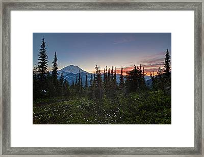 Last Lillies Light Framed Print by Mike Reid