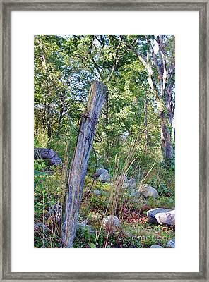 Last Post Standing At Beaver Lake Framed Print