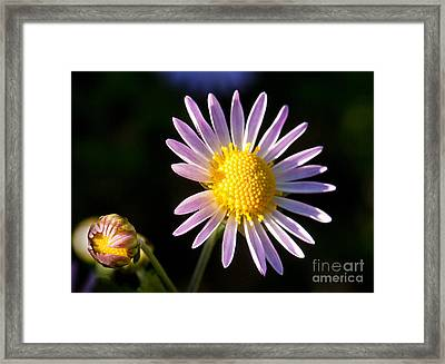 Framed Print featuring the photograph Last Ray Of Sun by Jim Moore