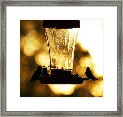 Last Snack Before Bed Framed Print by Julie Clements
