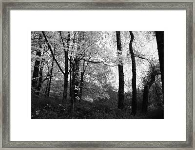 Lasting Leaves Framed Print