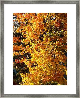 Late Day Brilliance Framed Print by Will Borden