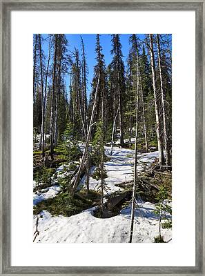 Late Spring In Yellowstone National Park Framed Print