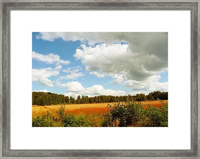 Late Summer Framed Print