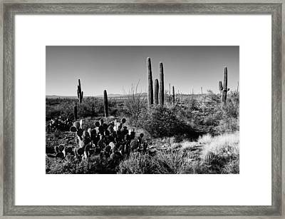 Late Winter Desert Framed Print
