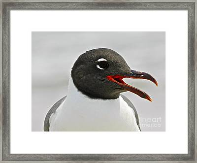 Framed Print featuring the photograph Laughing Gull Looking Left by Eve Spring