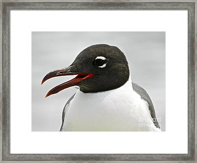 Framed Print featuring the photograph Laughing Gull Looking Right by Eve Spring